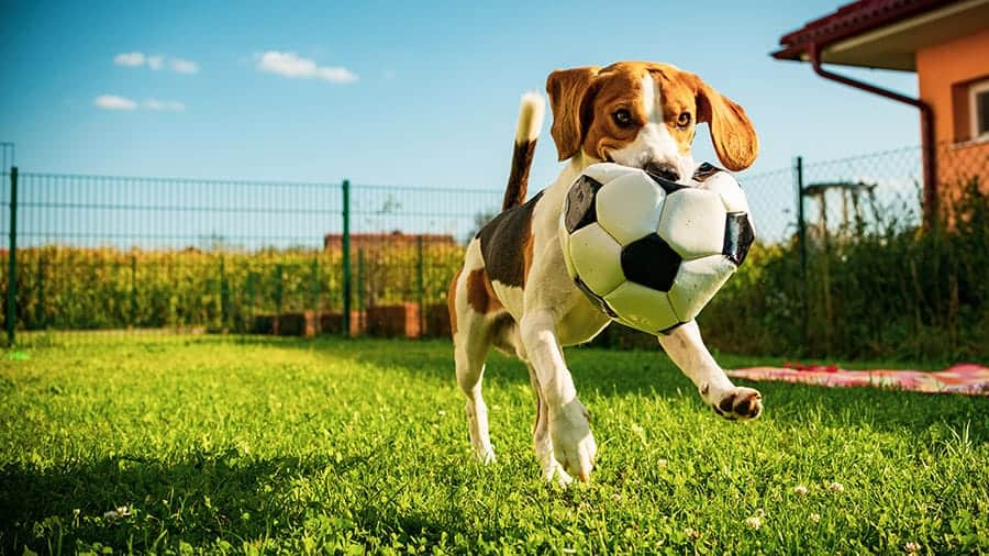 sports dog names - dog with soccer ball