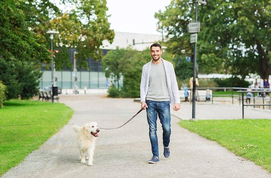 dog walking on a leash