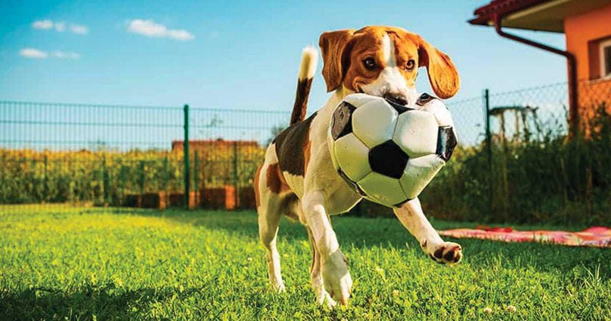 sports dog names