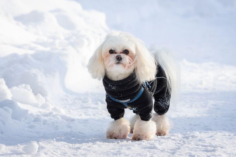 winter dog names