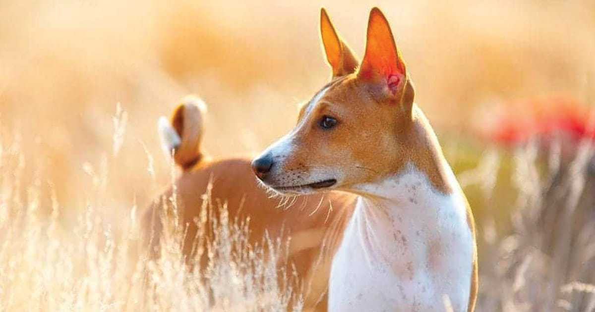 African Dog Names