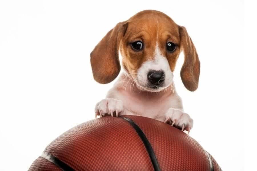 Athlete dogs