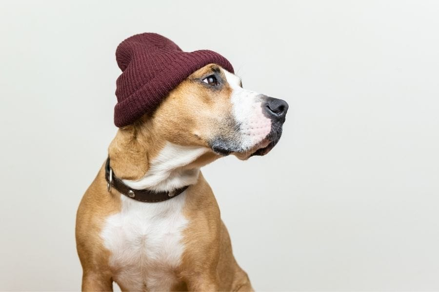Unique dog