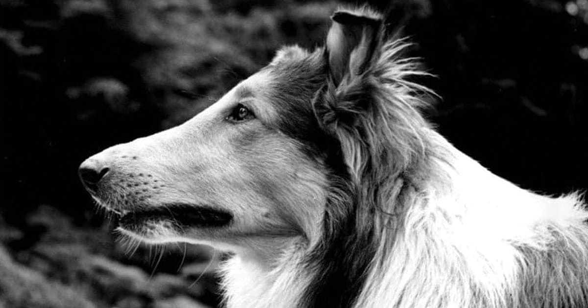 famous dog names