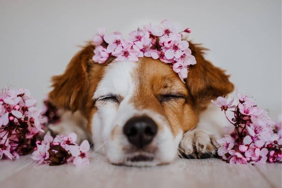 flower names for dogs