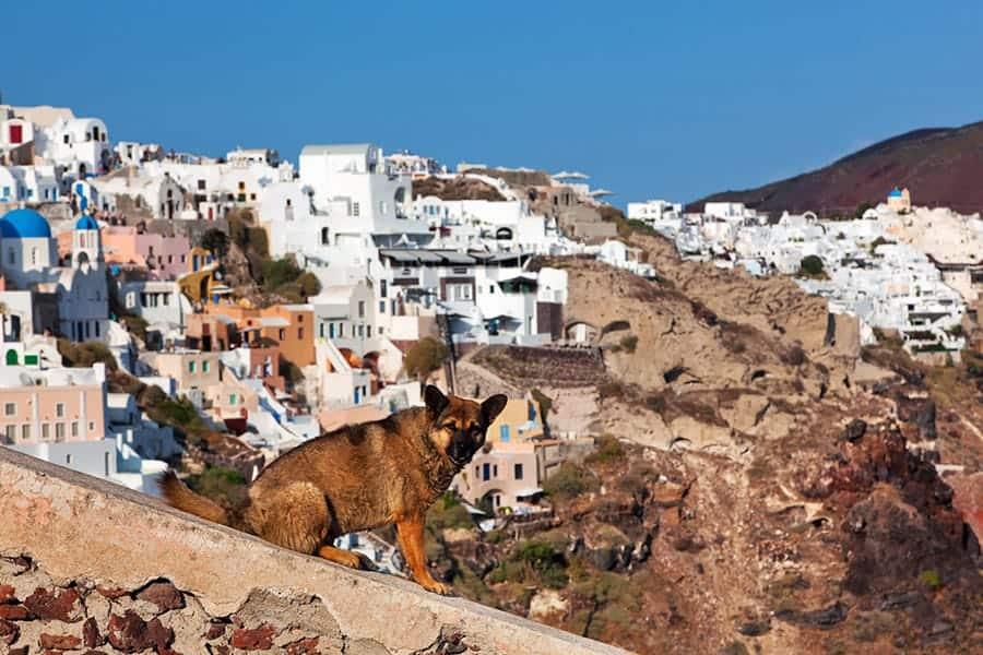 dog in greek city